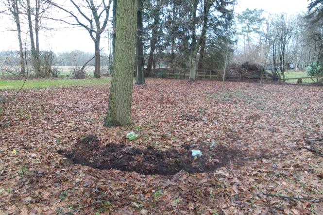 Ein laubbedeckter Waldboden mit ein paar Baumstämmen. Am Baum vorne im Bild sieht man kreisförmig aufgewühlte Erde neben der Blumenzwiebelpackungen liegen.