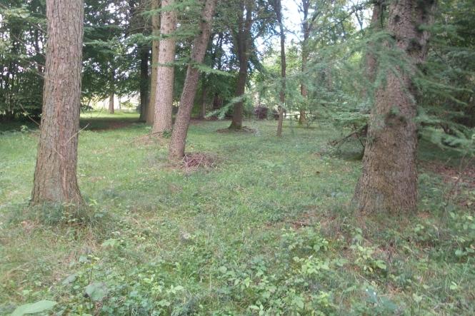 Hellgrüne Gräser zieren den Boden des Waldstücks auf dem zahlreiche Baumstämme von Nadel- und Laubbäumen zu sehen sind.